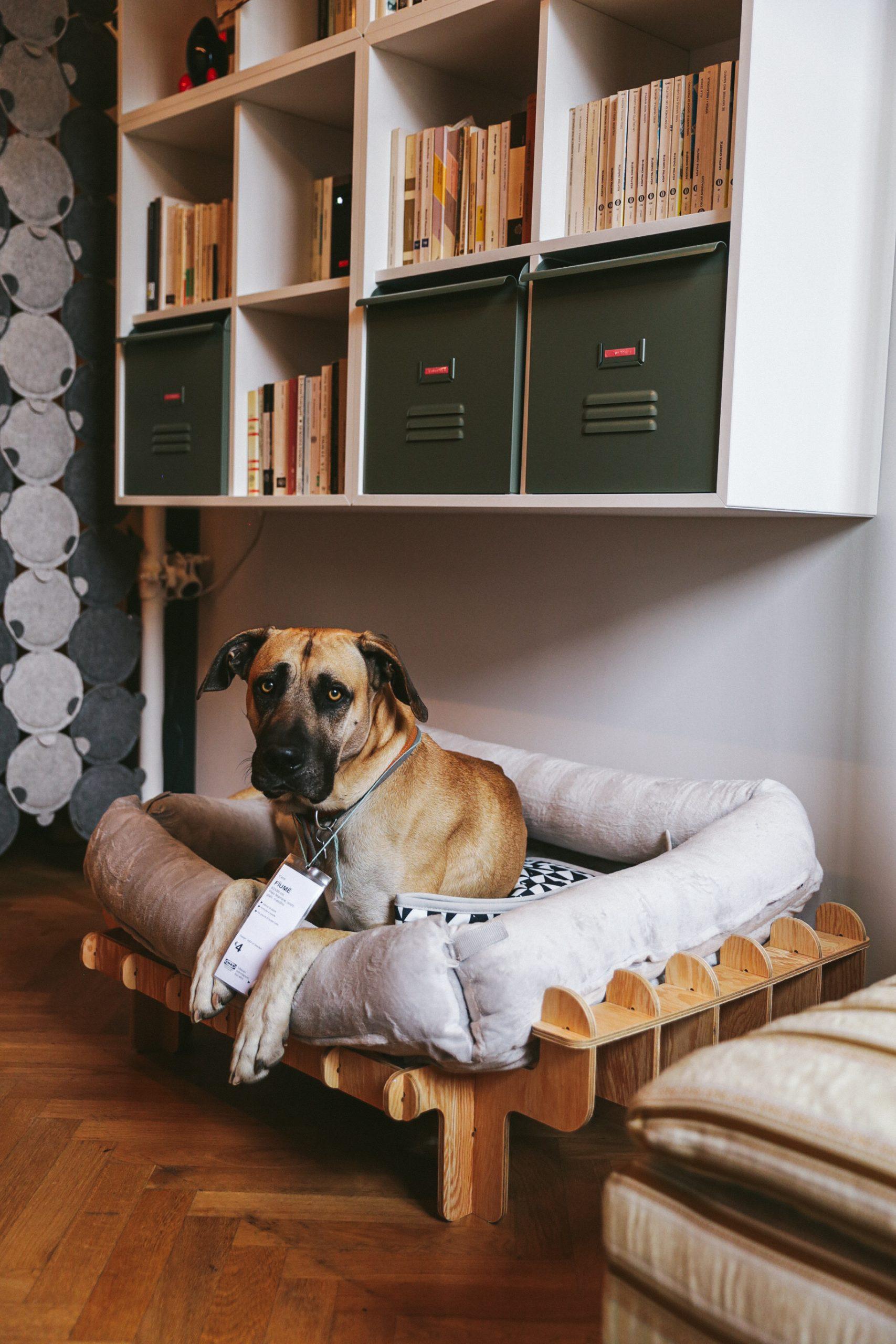 Miocugino IKEA Milano Design Week 2021 cuccia akutcha Fiume cane